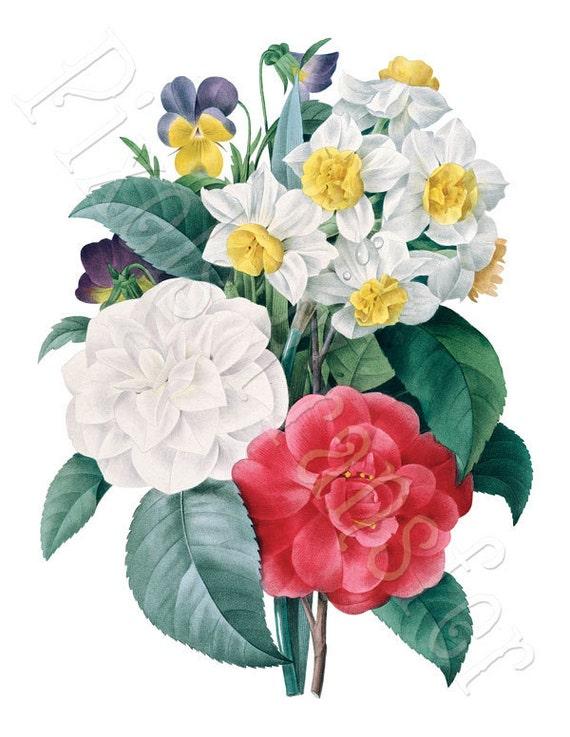 PANSIES dahlia camellia bouquet, Instant Download, Digital Image, vintage illustration REDOUTE 008