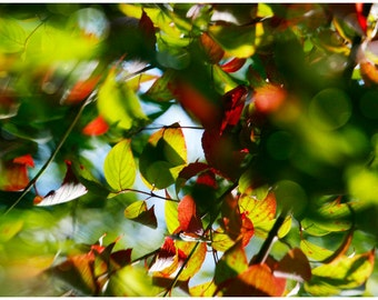Abstract large wall art, Leaves Photography, Summer Nature art, red green leaves photo, living room decor, oversized art, 20x30, 24x36 print