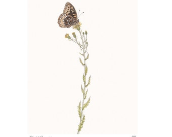 Great Spangled Fritillary Vintage Style Print