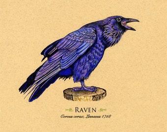 Raven Art Print  Black Bird 8 x 10 inches