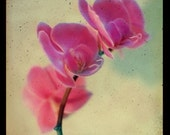Orchid Photograph, Still Life Photography,  Pink Flower Photo, TTV, Vintage Style, Bedroom Art, Romantic Kitchen Decor, Viewfinder, Retro
