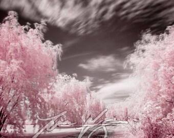BOGO SALE (Buy one, get one free) - Weeping Willow Lane - Fine art print - Borderless infrared photo
