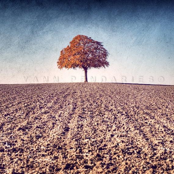 Landscape photography, Rustic decor, Autumn leaf, Indian summer, Tree photography, Autumn Photography, Farmhouse decor