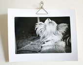 Pet photography art for vet office dog photo black & white - 8.5 x 11