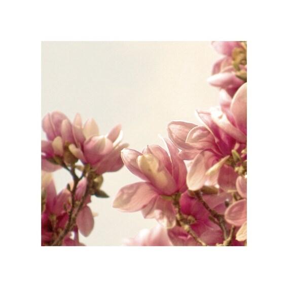 Pink Flower Fine Art Photograph Magnolia Sunrise Floral Raspberry Dreamy Print Romantic Nature Garden