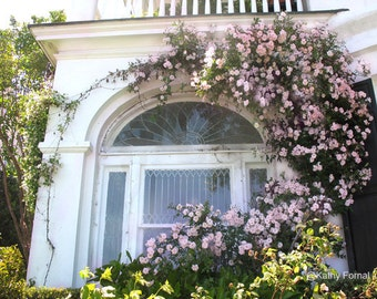 Charleston Photography, Charleston Floral Window, Charleston Window Boxes, Charleston Roses Window Boxes, Charleston Architecture Window Box