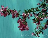 Pink Teal Turquoise Blue n Watermelon Pink Flowers 8x12 Fine Art Wall Decor Photography print