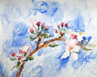 watercolor of Apple Buds and Blossom - april blooms - soft romantic shabby chic - summer cottage 8x10 giclee