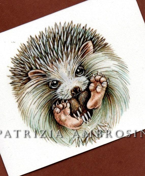 hedgehog ball-- ACEO PRINT  animal collectible card