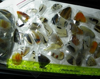 Montana Free Formed Cabochon Assortment of 100 (724-G)