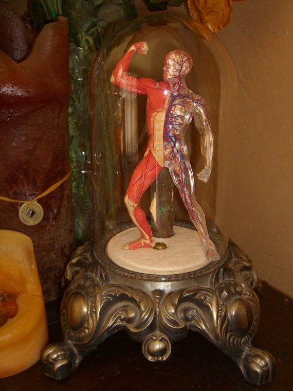 Skeletal Muscle Man Lamp in Glass Dome