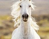 Freedom's Call - Fine Art Wild Horse Photograph - Wild Horse - Adobe Town - Fine Art Print - Iconic Wild Horse