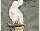 Cockatoo Bird Parrot Tropical - Digital Image Vintage Art Illustration