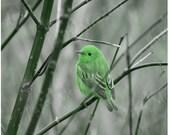 Bird Photography Download, Fairy Tale Bird, Green Little Bird Digital Photo Download, Nursery Art, Lucky, St. Patrick's Day, 12 x 12 inch