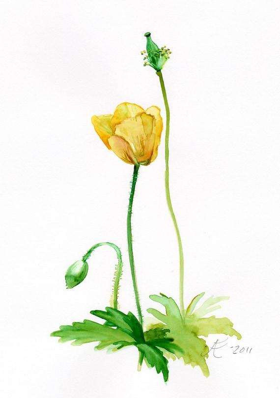 Yellow Poppy flower painting Fine Art Print of original