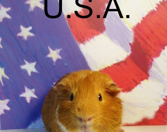 """USA Patriotic GUINEA PIG Flag Portrait - Fourth of July - Limited Edition 8x10"""" Glossy Cavy Photograph"""