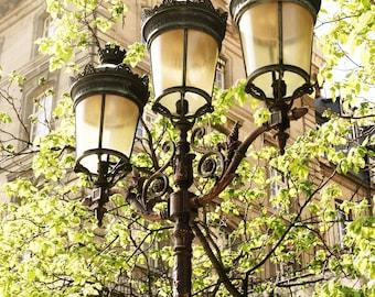 Paris Print - Lights of Paris Photography - French Decor Green Black Tan Wall Art Parisian Art Print Gas Lamp Print Tree Leaves Photo