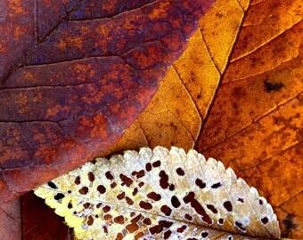 Fall leaves photo, fall decor, autumn leaf art, leaf abstract art, rustic home decor, nature wall art, fine art photography, log cabin | No2