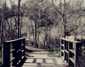 """Rustic woodland photography 