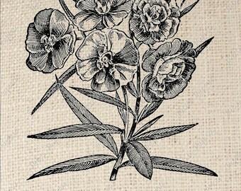 Oleander Flower Digital Download for Iron on Transfer