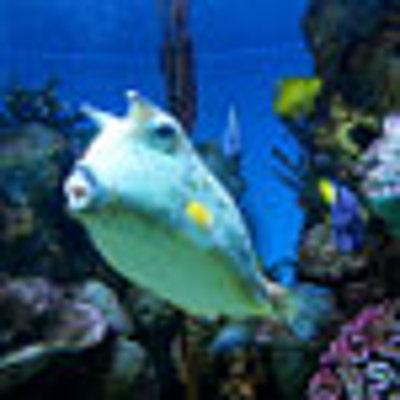 swimlittlefish