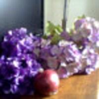 violetsonions