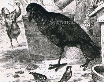 Raven & Terrier Dog Victorian Birds Ornithology 1870s Vintage Black White Natural History Engraving To Frame