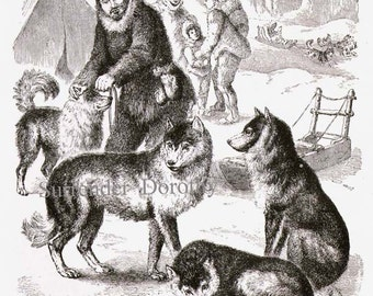 Siberian Husky Dogs Vintage Victorian Print 1870s Black & White Natural History Engraving To Frame