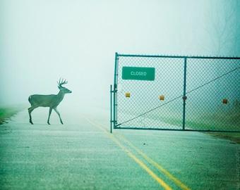 Deer photo, wildlife photography, buck, fence, signage, fog, mist, Texas, animal photography, green decor, decorative