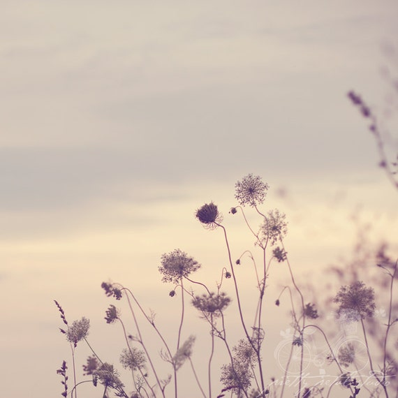 Floral Fine Art Photograph, Queen Annes Lace Flowers, Wildflowers, Summer, Vintage Feel, Soft Subtle Hues, Lavender Hues, Square 8x8 Print