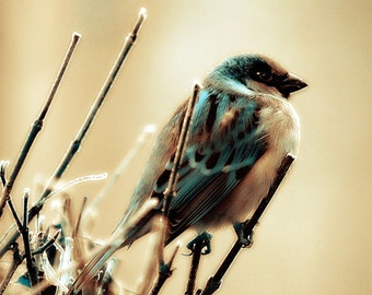 Instant Download Blue Bird Sparrow Nature Photography Digital Download Photograph Texture Commercial Use Digital Graphics
