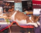 The Booklover - Oia - Santorini - Greece - Photography - Picture - Photo - Image - Decor - Fine Art Photography