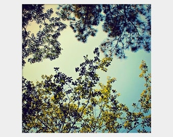 Treetops: square fine art nature photograph print with green leaves and blue sky