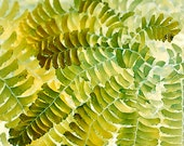 Fern  Photograph, Abstract Wall Decor, Nature Photography, Gold, Yellow - JudyStalus