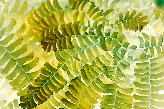 Fern Print,  Abstract Art, Nature Photography, Gold, Yellow, Green Decor, Rustic Decor, Fern Wall Decor