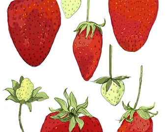 "ART504: Fresh Strawberries Illustration Reproduction 8"" x 10"""