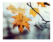 Fall Photo,  Autumn Leaf, 5x7 Print,  Fall Photograph, Nature Photo Rustic, Yellow Leaves, Blue Sky