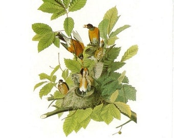 Audubon American Robin or Brown Thrasher for Framing, Collage, Altered Art, Paper Arts and MORE PSS 1734