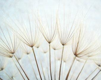 Botanical photography print pastel blue dandelion large wall art - Whisper