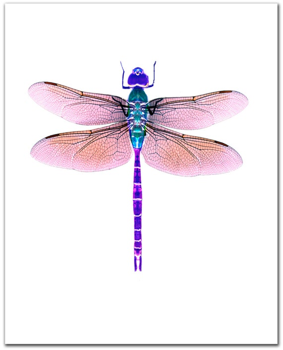 Dragonfly Art Giclee Print 8 X 10 Violet By Shirleybell