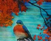 4x4 inches, Gift under 25, art, Autumn Bluebird, bird art, Original, Fine art photograph, drawing, art, nature decor, autumn, Fall decor