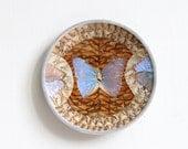 Vintage Butterfly Specimen Plate