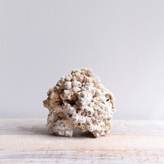 Large Vintage Coral Specimen Piece