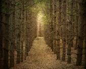 landscape fine art photography woods woodland trees path gallery wrap home decor office decor Thanksgiving