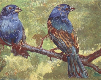 Indigo Finches, Blue Birds, Scan 1902, Instant Download DB036