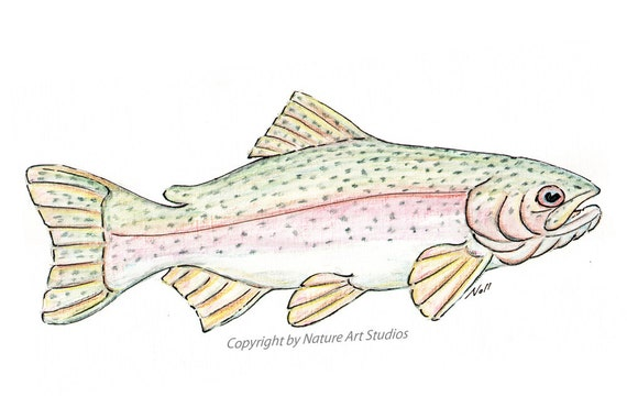 Items similar to rainbow trout fish art print from for How to fish trout