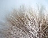 PEACOCK HUE FEATHERS, Very rare, Oatmeal, Taupe / 239