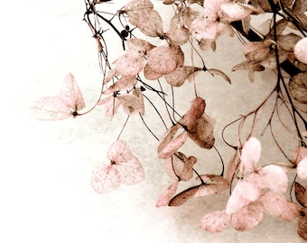 Pink Flower Fine Art Photo Hydrangea Pink Brown Nature Baby Nursery Shabby Chic