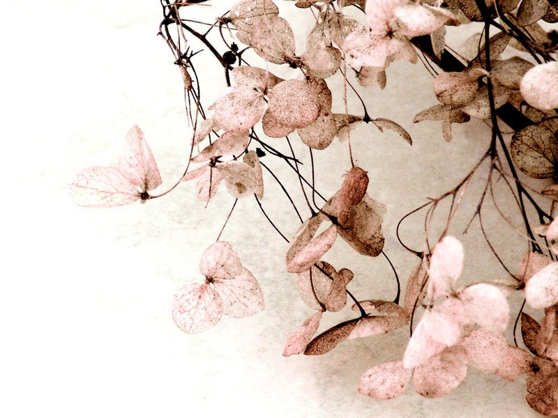 Pink Flower Fine Art Photo Hydrangea Pink Brown Nature Baby