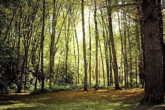 North Carolina Forest Fine Art Print - Nature, Botanical, Wildlife, Garden, Nursery Decor, Home Decor, Baby, Zen, Gift